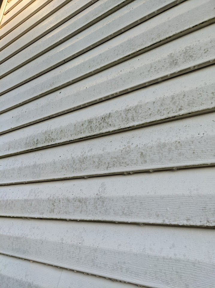 Vinyl Siding has mold and algae