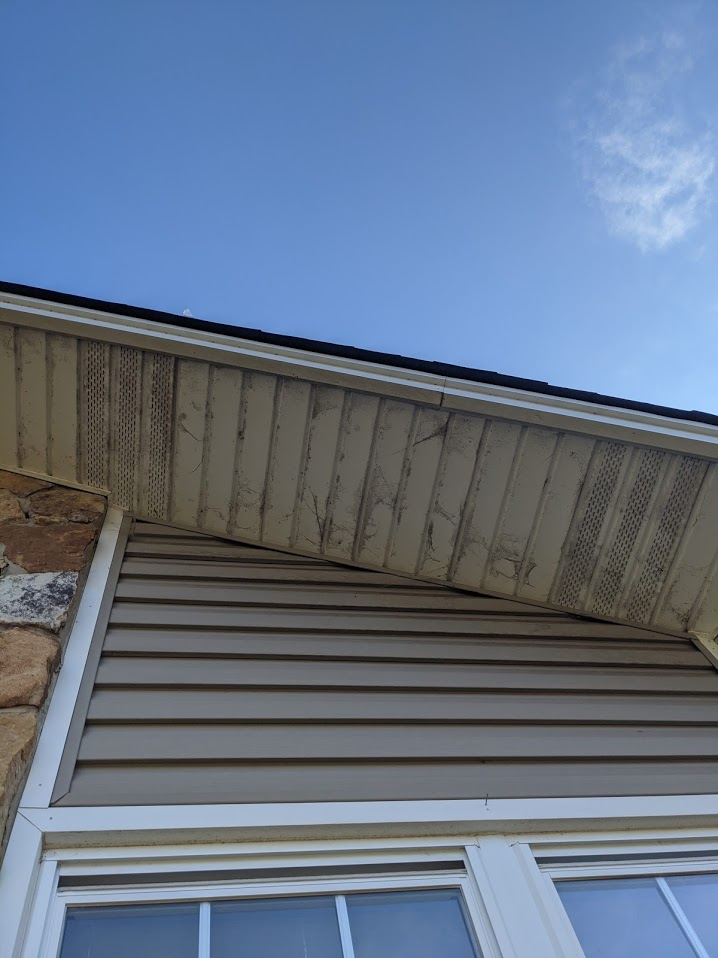 Black and Grey mold and spiderwebs on all the soffits