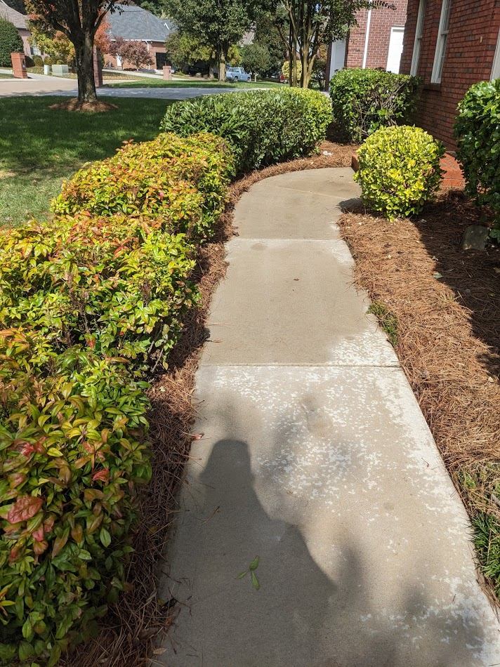 Algae and dirt has been removed from sidewalk by pressure washing