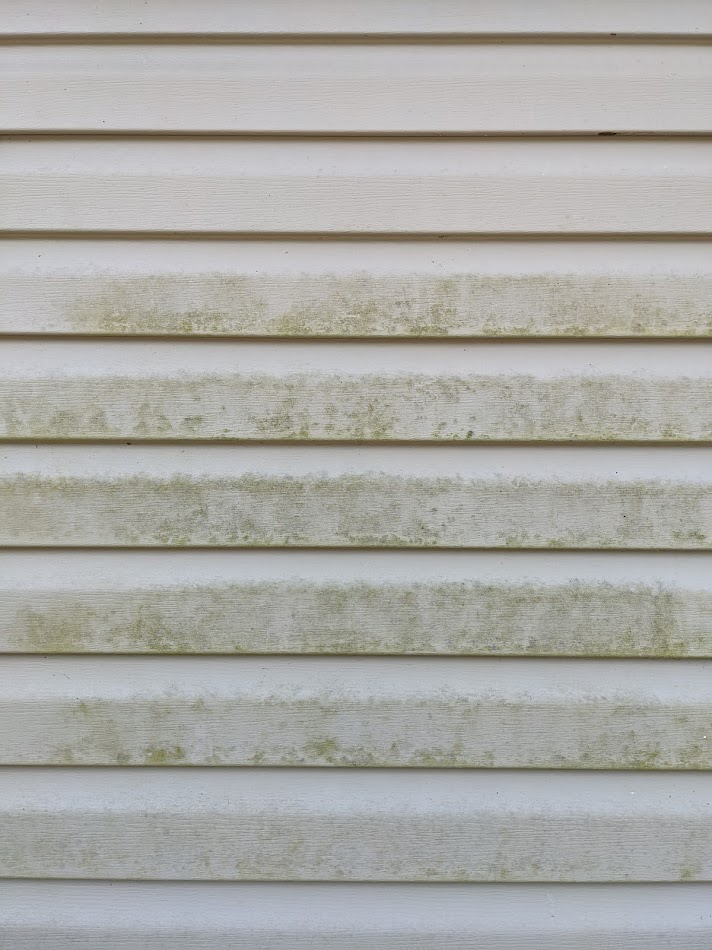 Green algae growing on vinyl siding of home